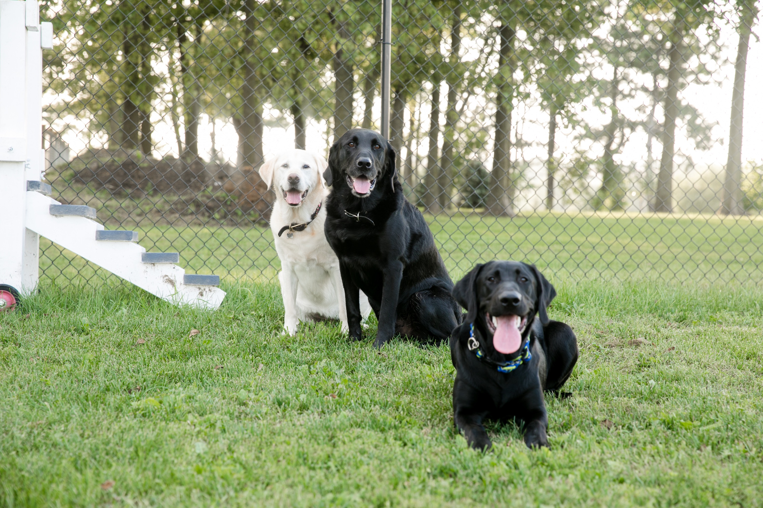 Happy Acres Dog Training And Boarding Des Moines Ia